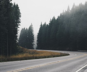 ENTER THE DARK FOREST ROAD